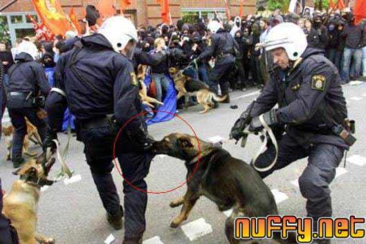 police dog bite police man