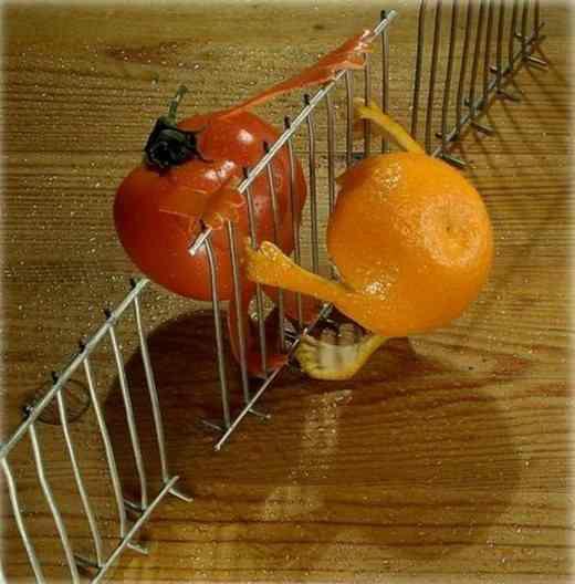 tomato orange
