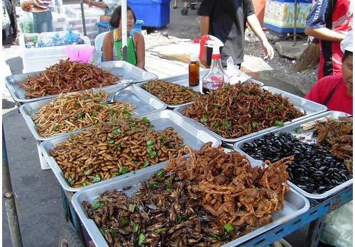 food bugs