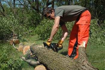 worst job - lumberjack