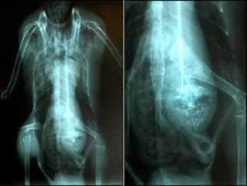 x-ray alien