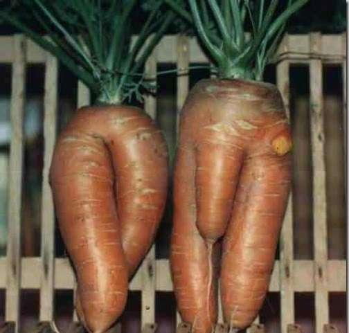 bizarrely shaped vegetable