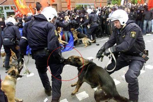 funny riot police dog