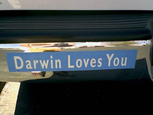 Funny Bumper Car Sticker Darwin