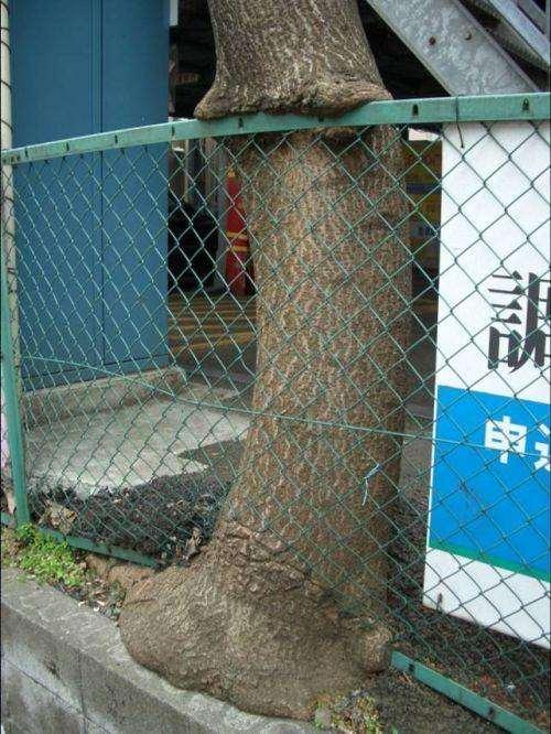 tree strenght