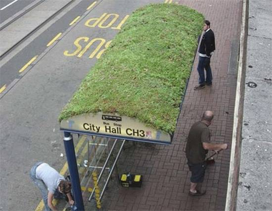 creative bus stop grass